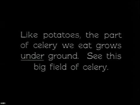 vídeos y material grabado en eventos de stock de vegetable gardening - 10 of 13 - vea otros clips de este rodaje 2512