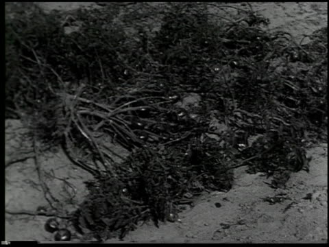 vídeos y material grabado en eventos de stock de vegetable gardening - 11 of 13 - vea otros clips de este rodaje 2512