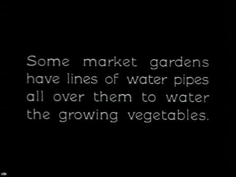 vídeos y material grabado en eventos de stock de vegetable gardening - 12 of 13 - vea otros clips de este rodaje 2512