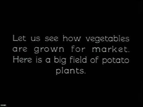 vídeos y material grabado en eventos de stock de vegetable gardening - 2 of 13 - vea otros clips de este rodaje 2512