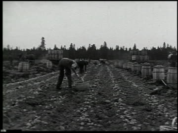 vegetable gardening - 4 of 13 - この撮影のクリップをもっと見る 2512点の映像素材/bロール