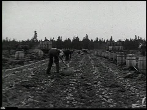 vídeos y material grabado en eventos de stock de vegetable gardening - 4 of 13 - vea otros clips de este rodaje 2512