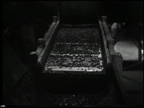 vídeos y material grabado en eventos de stock de vegetable gardening - 5 of 13 - vea otros clips de este rodaje 2512