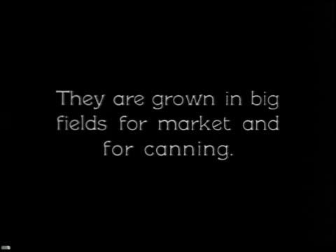 vídeos y material grabado en eventos de stock de vegetable gardening - 8 of 13 - vea otros clips de este rodaje 2512