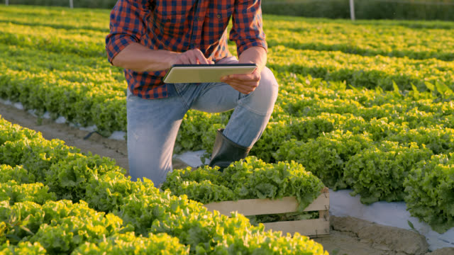 ds vegetable grower using a tablet in a field - analyzing stock videos and b-roll footage