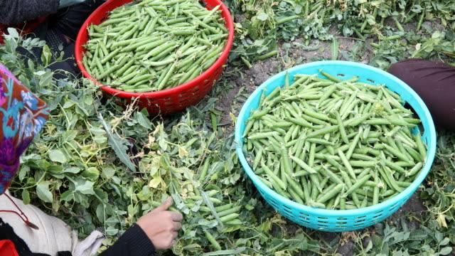 Vegetable vendor selling variety of vegetables