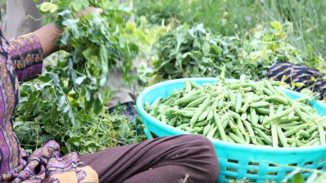Gemüsehändler, die Vielfalt an Gemüse zu verkaufen