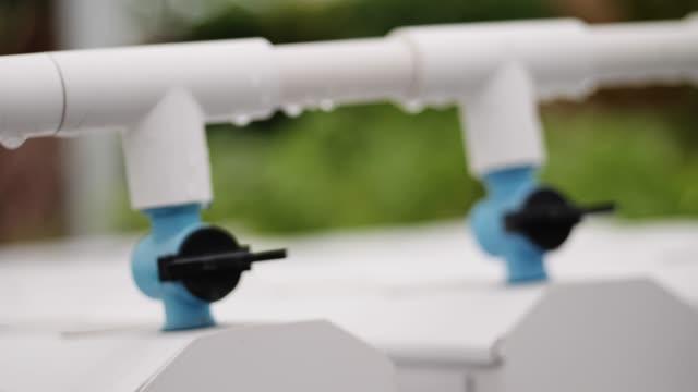 vídeos y material grabado en eventos de stock de verduras y jardín hidropónico. - hidropónica