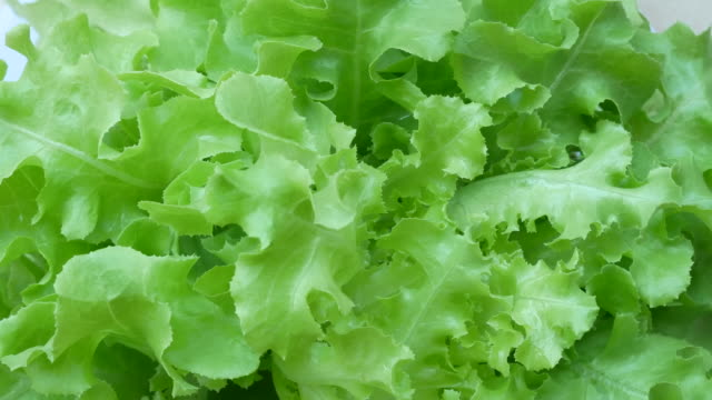 vegetables organic and hydroponic vegetables cabbage - agricultural fair stock videos and b-roll footage