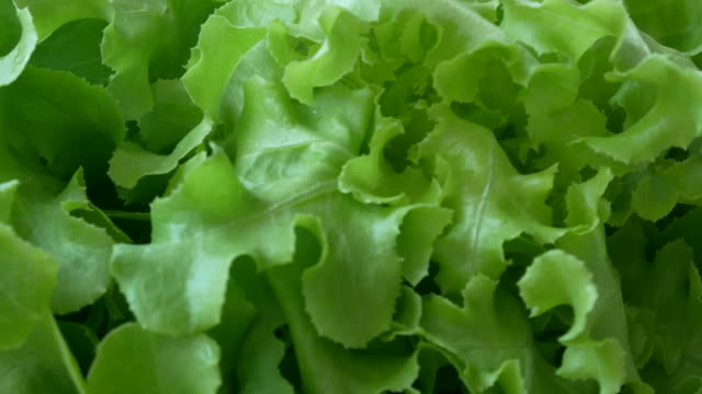 vegetables organic and hydroponic vegetables cabbage - lettuce stock videos & royalty-free footage