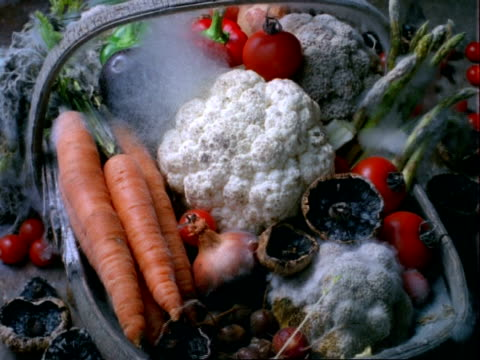 t/l cu vegetables rotting in wooden basket - trug stock videos & royalty-free footage
