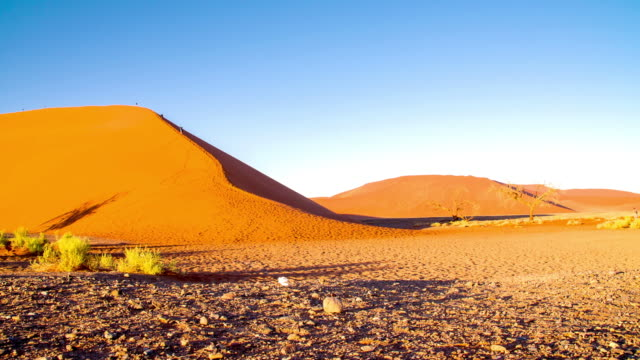 ds ws vegetation and tourists in the namibian desert - namibian desert stock videos and b-roll footage