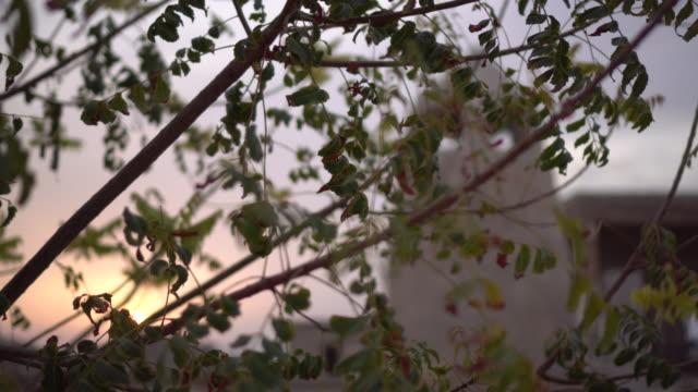 Vegetation blocks tower in Ras al-Khaimah