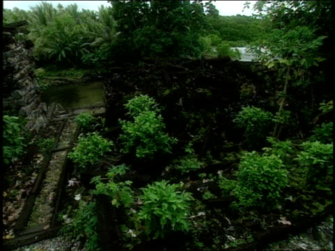 vegetation encroaches on the ruins of nan madol. - micronesia stock videos & royalty-free footage