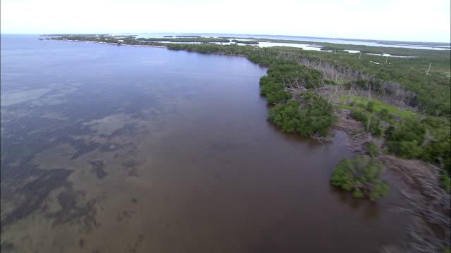 vegetation lines the coast along florida's everglades. - 湿地点の映像素材/bロール