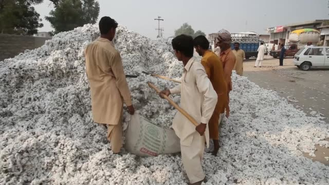 vehicle loaded with cotton arrives at a market in the district of lodhran, punjab province, pakistan, on thursday, oct. 24 workers unload bundles of... - raw footage stock videos & royalty-free footage