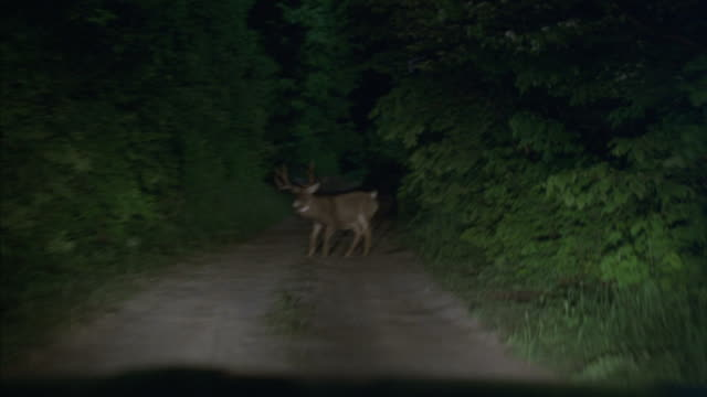 vídeos de stock, filmes e b-roll de a vehicle stops to avoid hitting a buck. - farol luz de veículo