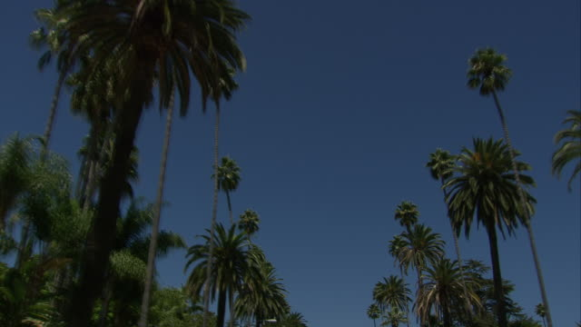 Vehicle POV, TS with TU palm-tree lined road / Beverly Hills, California, United States