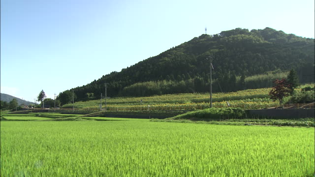 vehicles drive past rice paddies and sunflower fields near hagi city, japan. - 郊外点の映像素材/bロール