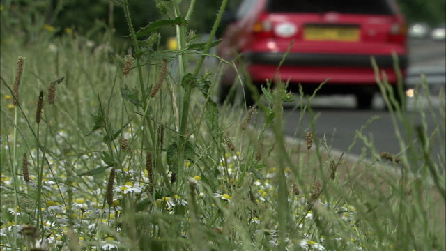 Vehicles speed past vergeside plants on motorway, UK