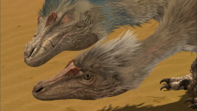 velociraptors confront each other and fight in a desert. - extinct stock videos & royalty-free footage