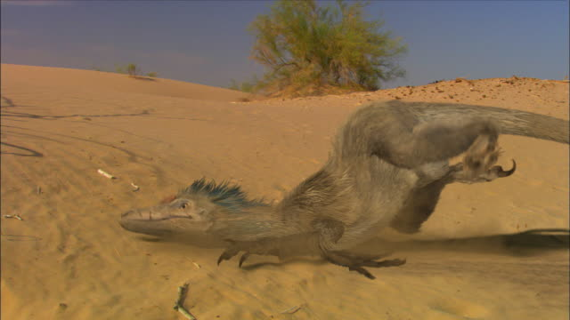 cgi, ms, velociraptors falling on ground - paleozoology stock videos and b-roll footage