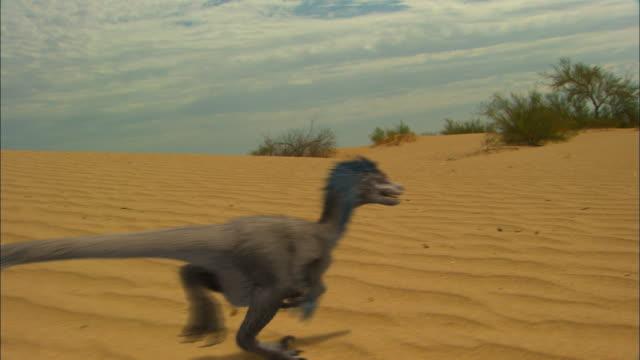 CGI, MS, PAN, Velociraptors running on sand dune