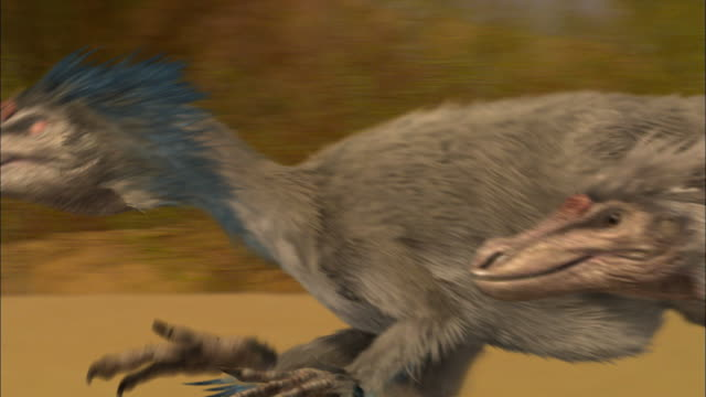 cgi, cu, pan, velociraptors running on sand dune - paleozoology stock videos and b-roll footage