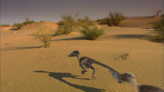 CGI, MS, CS, Velociraptors running on sand dune