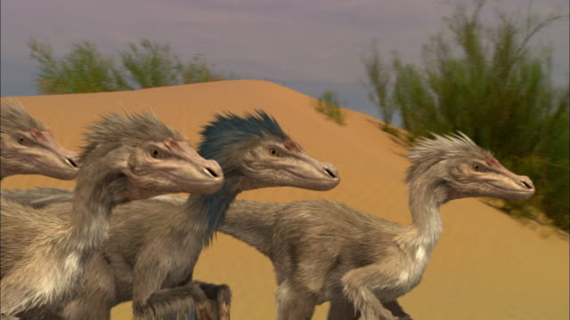 cgi, cu, pan, velociraptors walking on sand dune - paleozoology stock videos and b-roll footage