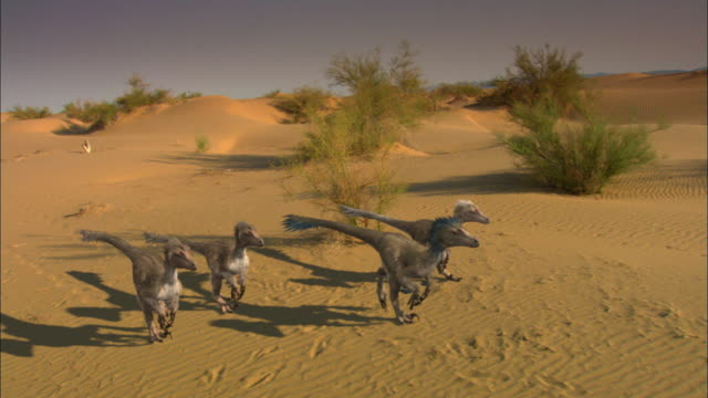 cgi, ms, cs, velociraptors walking on sand dune - paleozoology stock videos and b-roll footage