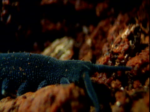 velvet worm wanders over soil as it hunts, new south wales - animal antenna stock videos & royalty-free footage