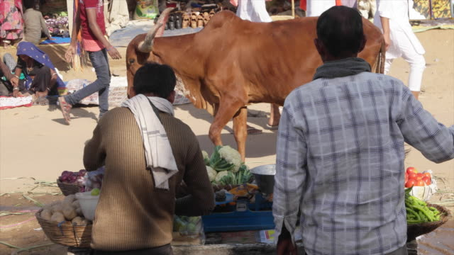 vendor selling vegetables at pushkar mela festival with vibrant folk music and dances, horse and camel races, religious bathing and a carnivals and... - holy water stock videos & royalty-free footage