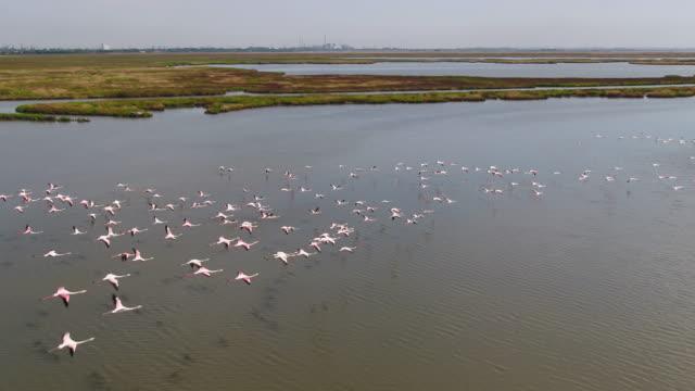vídeos y material grabado en eventos de stock de laguna veneciana - pantano zona húmeda
