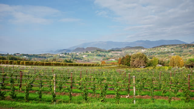 + Veneto Vineyard Time Lapse 4 K