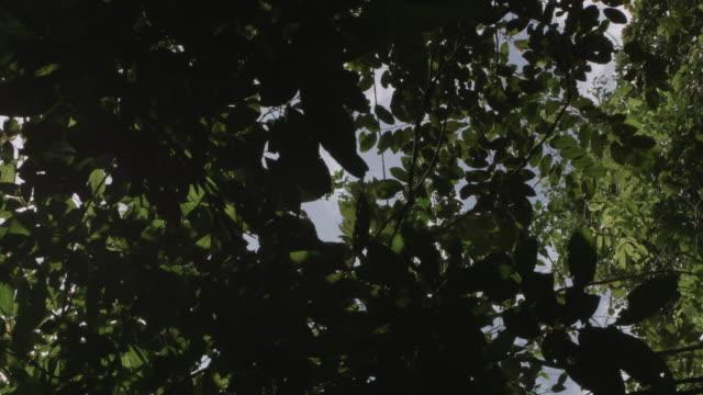 Venezuela: Trees and leaves