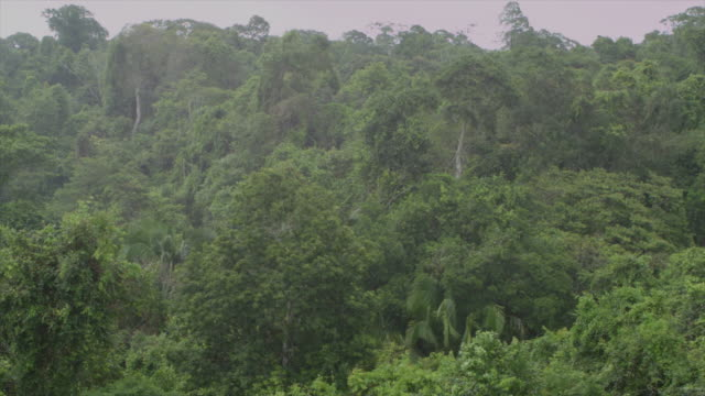 vídeos de stock e filmes b-roll de venezuela: tropical forest under rain - monção