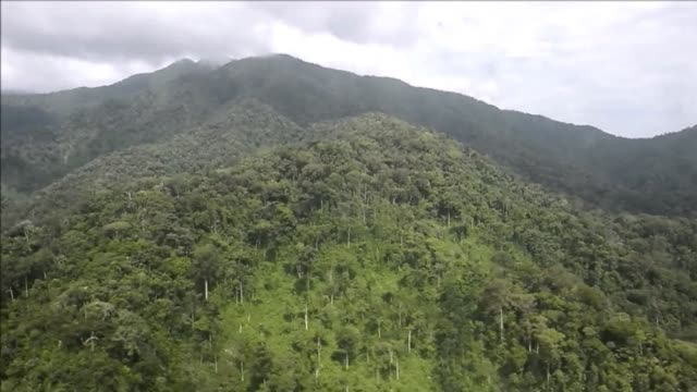 venezuelan soldiers took part in an operation of destruction of clandestine cocaine laboratories in the sierra de perija two kilometers from the... - crudo video stock e b–roll