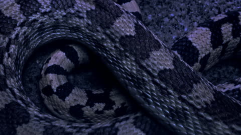 venomous snake spotted on the desert at night - viper stock videos & royalty-free footage
