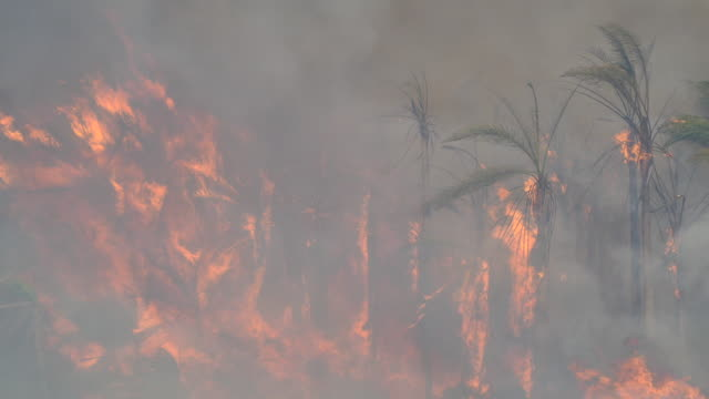 Fire driven by winds rip through a palm tree farm along the 101 Freeway in the Faria Beach near the Pacific Ocean The Thomas fire jumped the 101...
