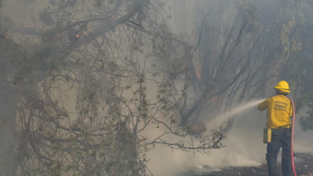 fire fighters spray water on a burning tree after the wind driven thomas fire rips through a palm tree farm along the 101 freeway in the faria beach... - ventura stock videos and b-roll footage