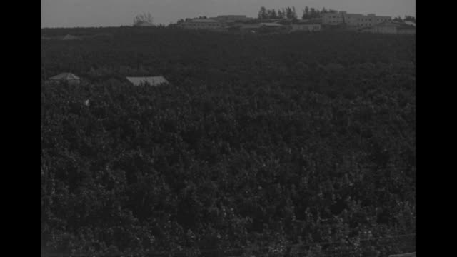 stockvideo's en b-roll-footage met vs verdant citrus groves / area with tall palm trees / vs men crops in ground and banana trees / note exact year not known - palestijnse gebieden