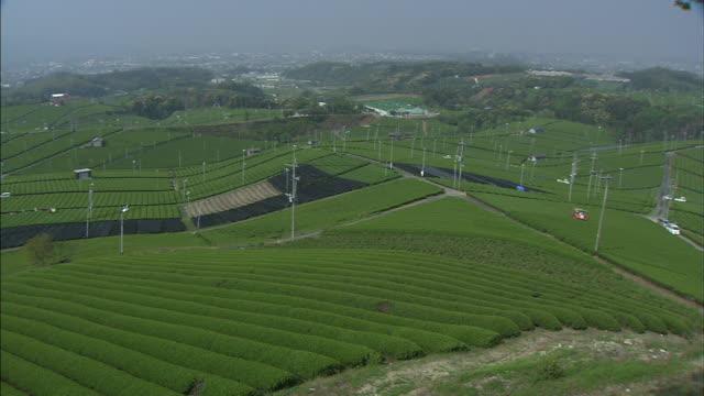Verdant tea plantations cover an expansive countryside.
