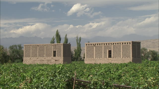 verdant vineyards surround two raisin houses silk road china - raisin stock videos and b-roll footage