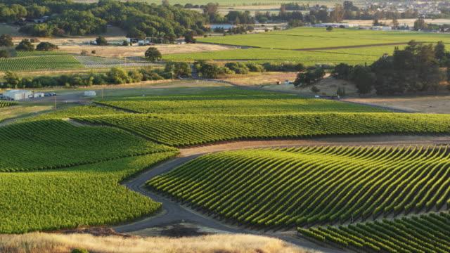 Verdant Viticultural Landscape - Drone Shot
