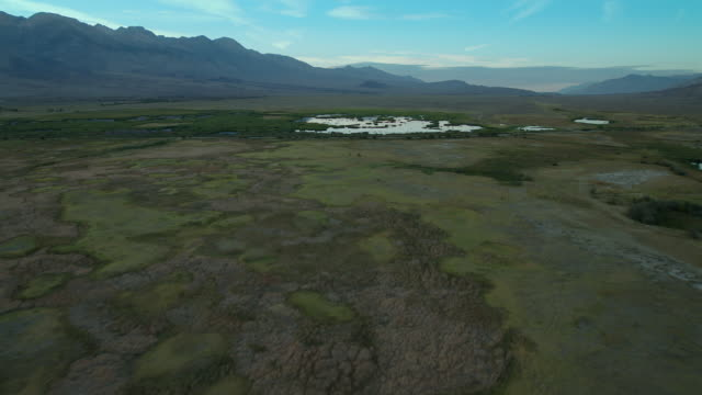verdant wetlands in the otherwise arid owens valley, california. - basin and range province stock videos and b-roll footage