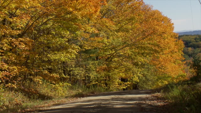 Vermont Dirt Road W- Trees With Fall Colors