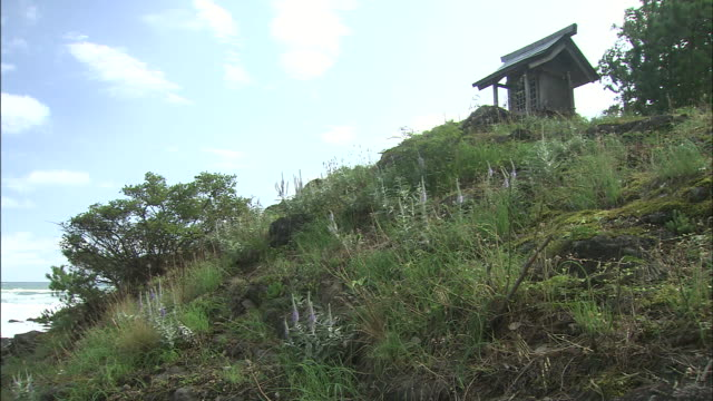 veronica ornata abloom on the hillside of the island   middle long - shimane prefecture stock videos & royalty-free footage