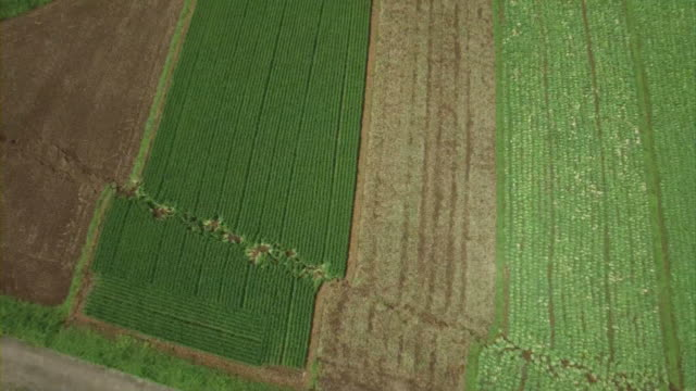 vertical aerial view of a long surface rupture running through a large agricultural field along fault line in the futagawahinagu fault zone in... - zoom out stock videos & royalty-free footage