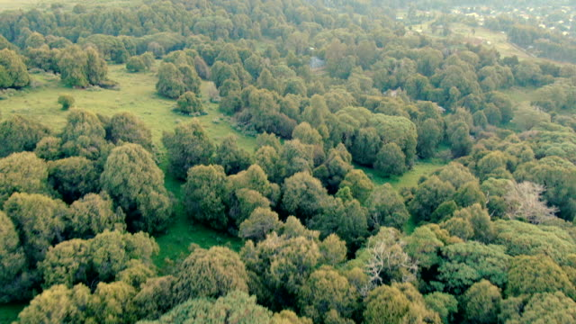 vertical aerial view of dinsho forest with hagenia woodland and juniper trees- one of last remaining natural habitats in ethiopia - ethiopia stock videos & royalty-free footage
